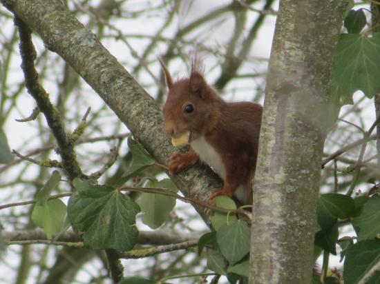 mon copain l'écureuil
